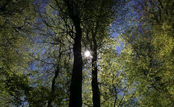 Natur (248)