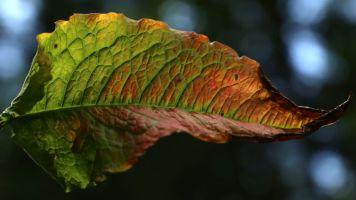 Natur (278)