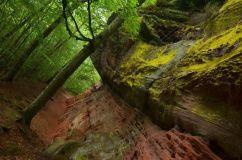 Altschlossfelsen im Pfälzerwald (11)