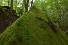 Altschlossfelsen im Pfälzerwald (13)
