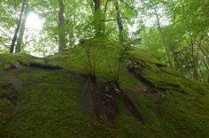 Altschlossfelsen im Pfälzerwald (14)