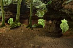 Altschlossfelsen im Pfälzerwald (23)