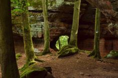 Altschlossfelsen im Pfälzerwald (24)