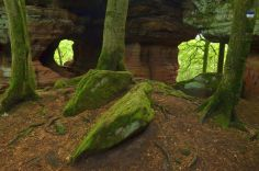 Altschlossfelsen im Pfälzerwald (25)