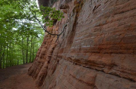 Altschlossfelsen im Pfälzerwald (8)