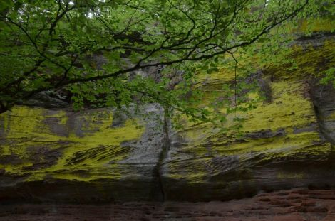 Altschlossfelsen im Pfälzerwald (9)